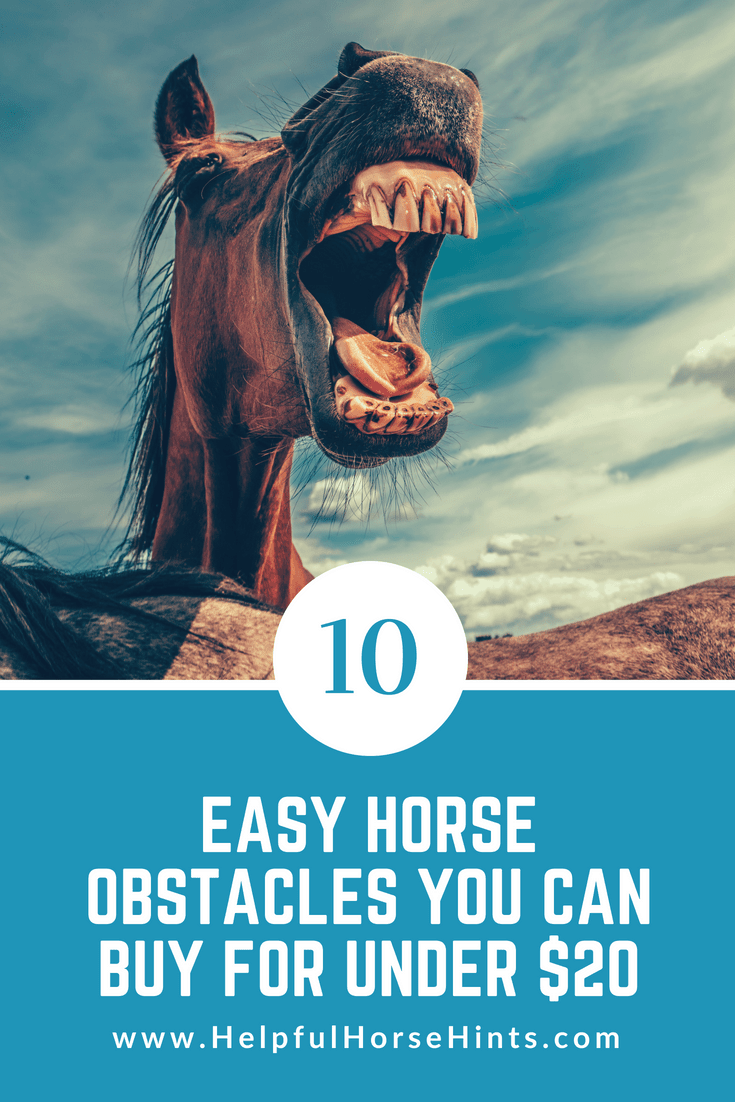 10 Easy Horse Obstacles You Can Buy for Under $20