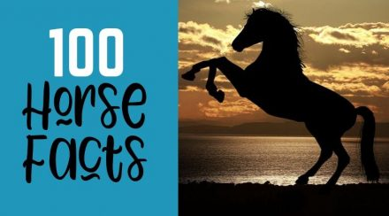 100 Horse Facts – Organized by Category!