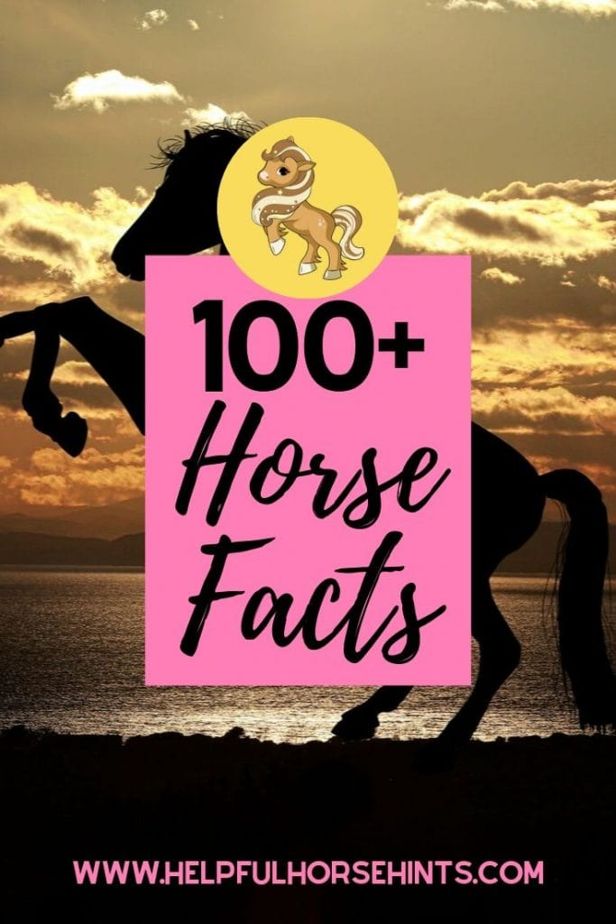Here are 100 horse facts organized into categories like early history, common breeds, health, disciplines and uses, tack, horse care and more.