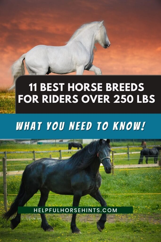 11 Best Horse Breeds For Riders Over 250 Lbs Helpful Horse Hints