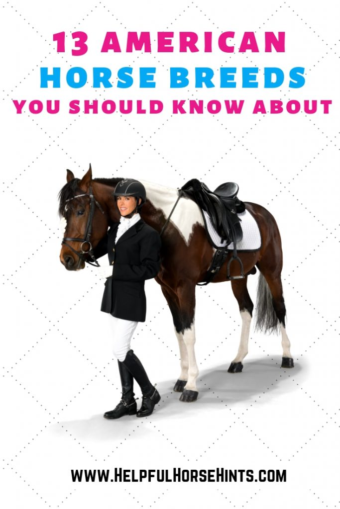 13 american horse breeds you should know about