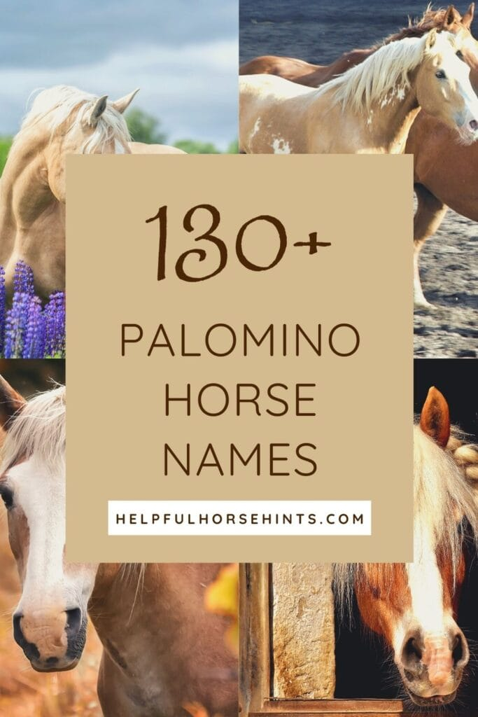 Pinterest pin - 130 Palomino Horse Names