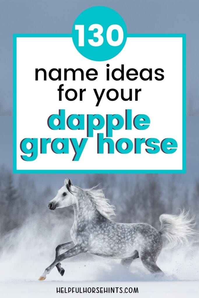 130 Dapple Gray Horse Name Ideas For Males Females Helpful Horse Hints