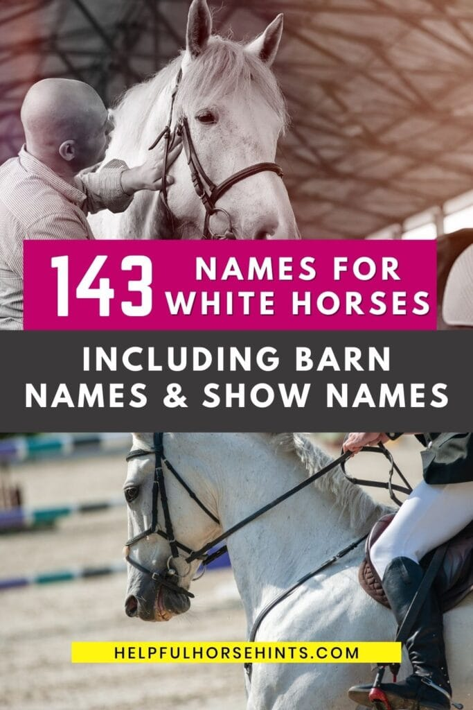 143 Names For White Horses Including Barn Names Show Names Helpful Horse Hints