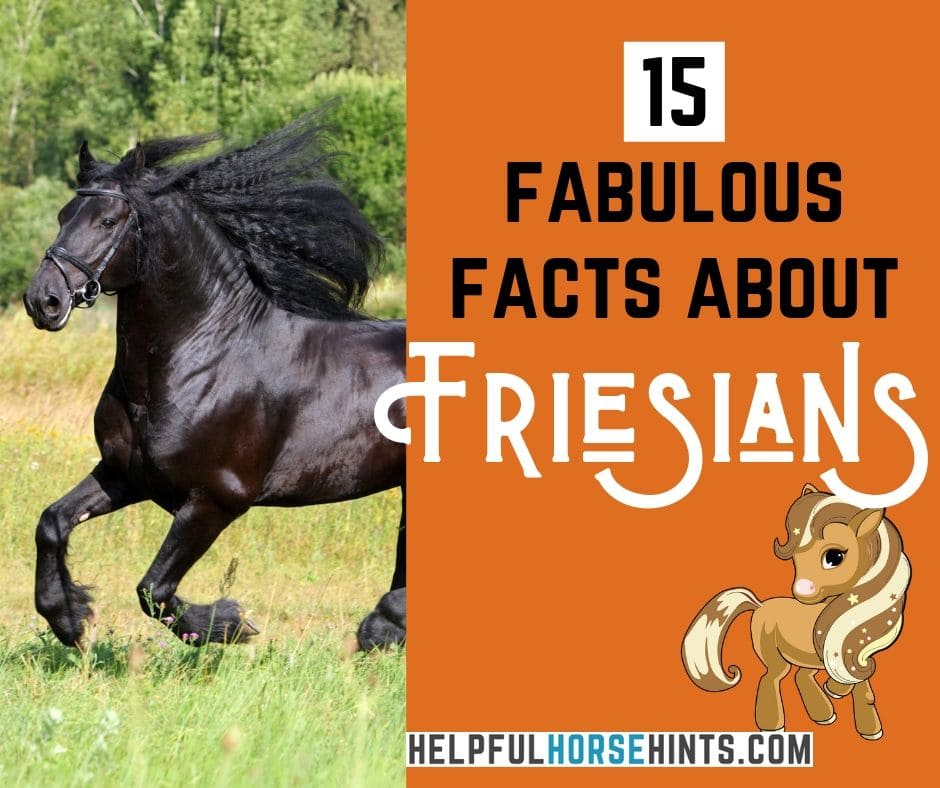 15 Fabulous Facts About Friesian Horses