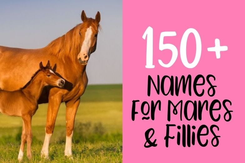 150+ Horse Names for Fillies and Mares + Tips for Naming