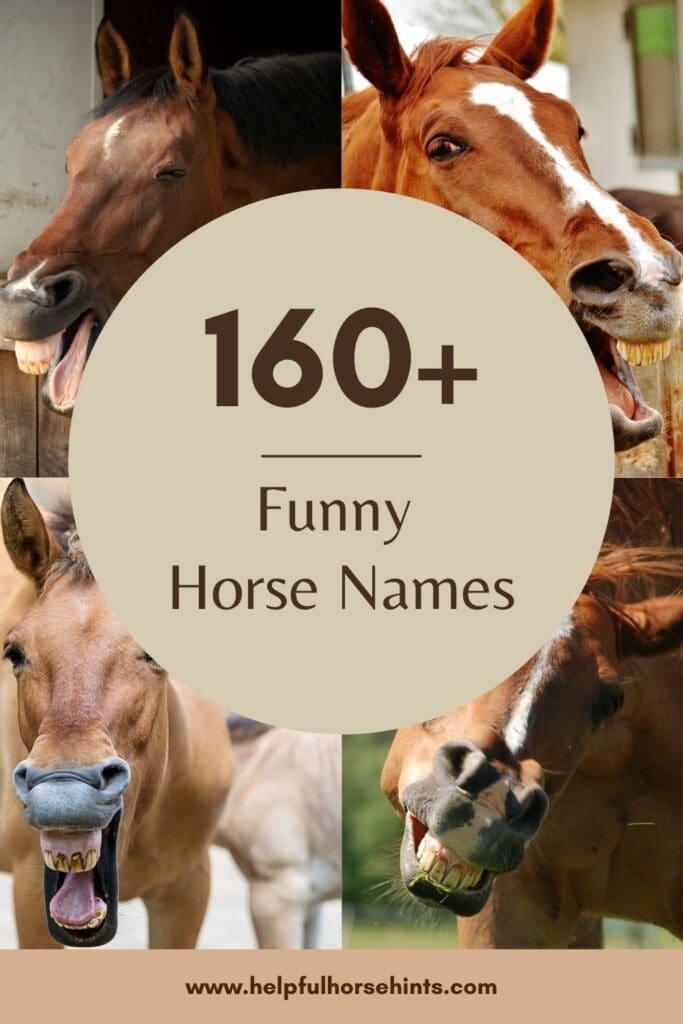 Pinterest pin - 160+ Funny Horse Names