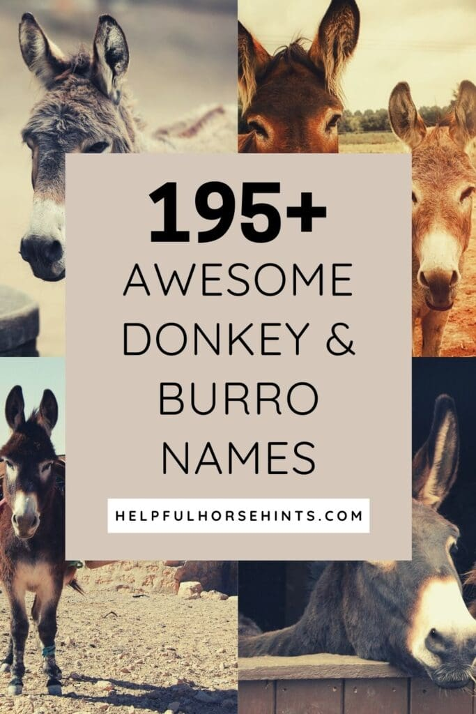 Pinterest pin - 195 Awesome Donkey & Burro Names