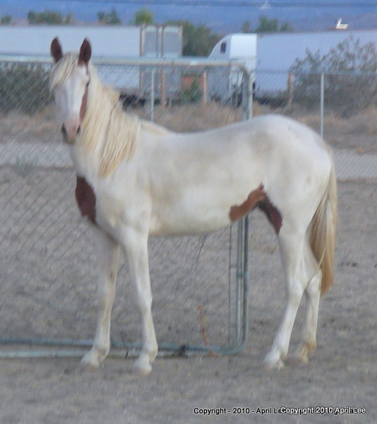 blurry photo of pinto horse