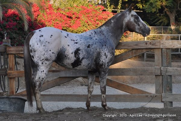 Rocky - Horse Photography Tips