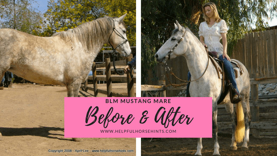 Before & After - BLM Mustang Mare