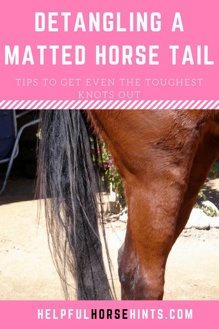 DIY Detangling a Matted Horse Tail