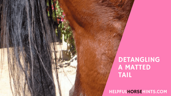 Detangling a Matted Horse Taill