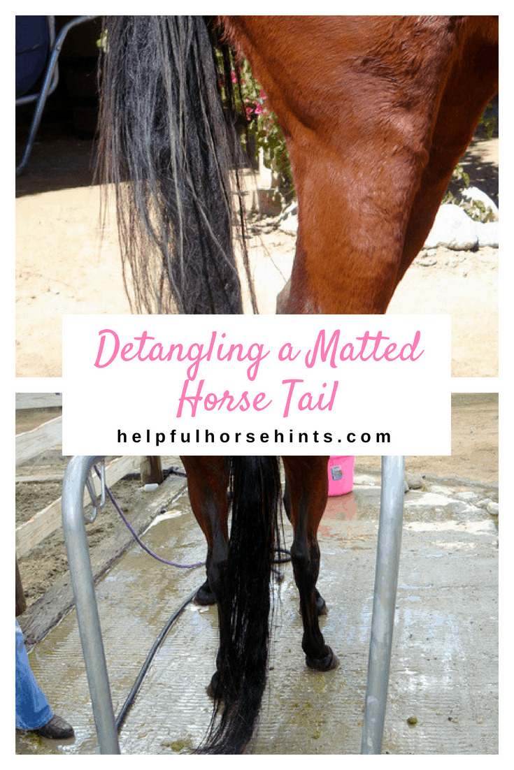 Detangling a Matted Horse Tail
