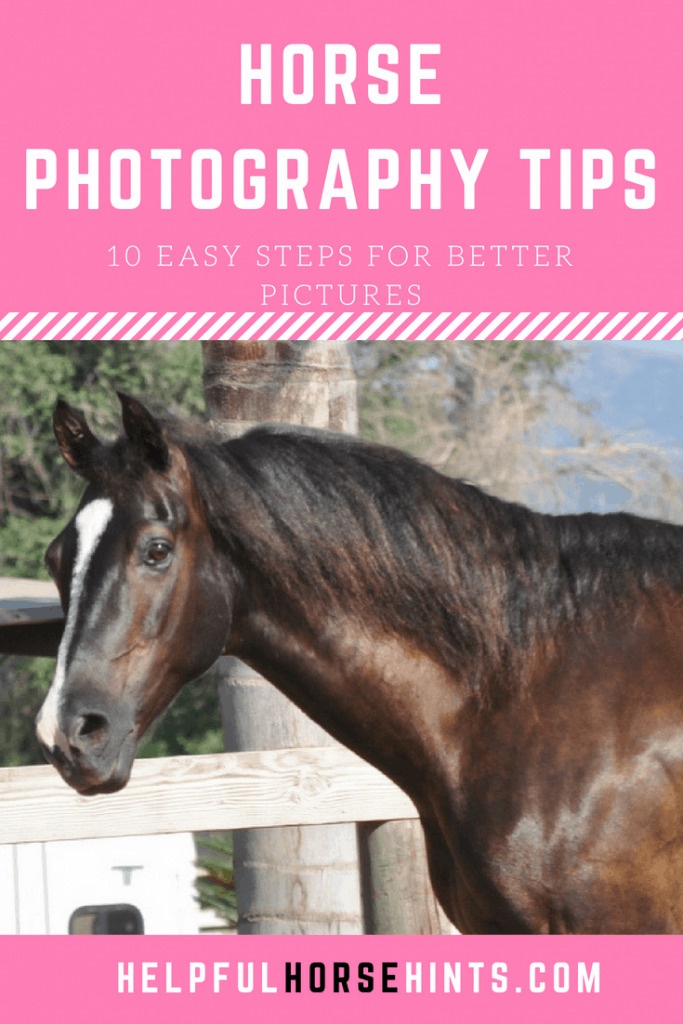 Horse Photography Tips