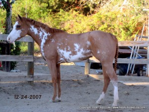 Paint Mare Makeover Day 4