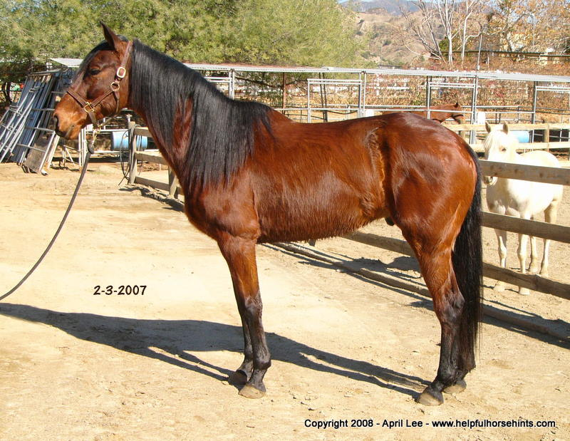 Thoroughbred Horse Makeover Before