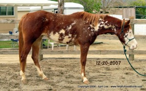 Paint Horse Makeover Before