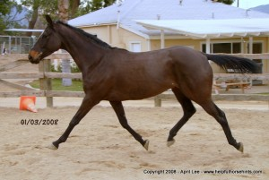 Thoroughbred Horse Makeover at 14 days