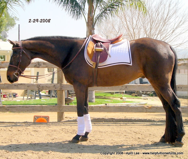 Thoroughbred Makeover After  71 days