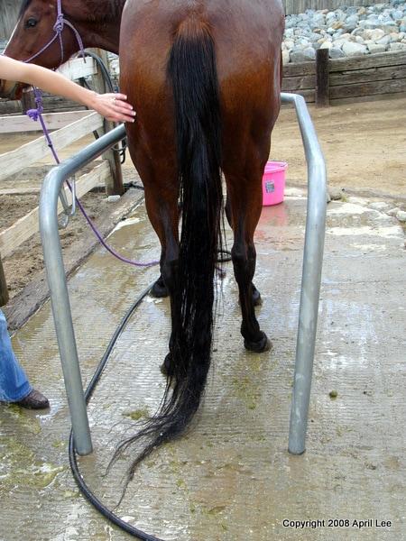 detangled horse tail