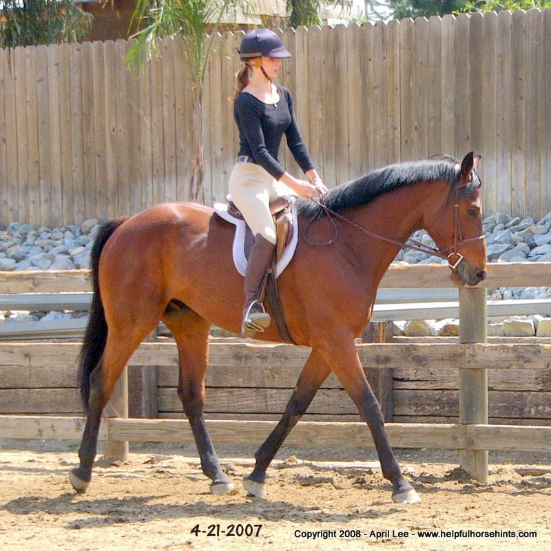 Thoroughbred Horse Makeover After