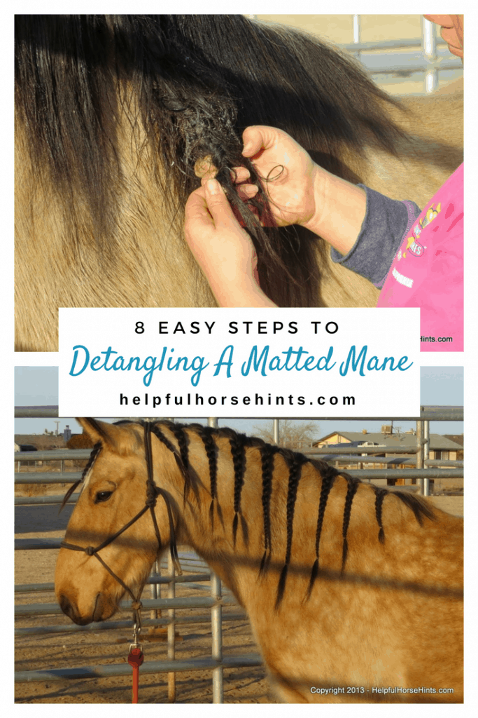 8 Steps to Detangle Matted Mane
