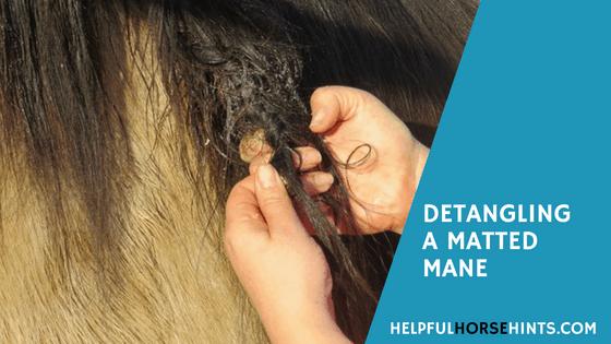 Detangling A Matted Horse Mane