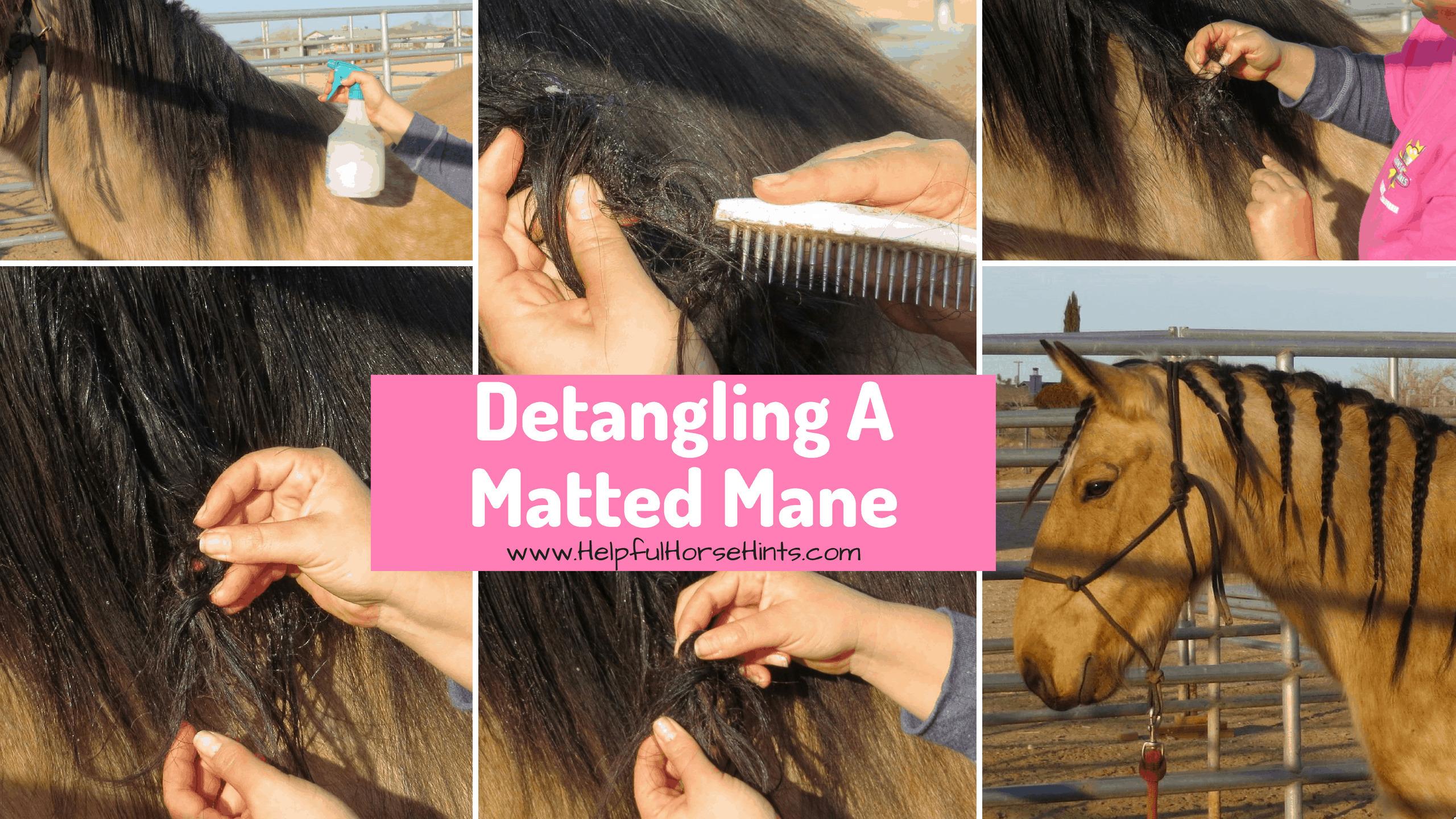 Detangling A Matted Mane