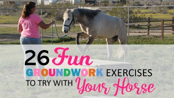 26 Fun Horse Groundwork Exercises