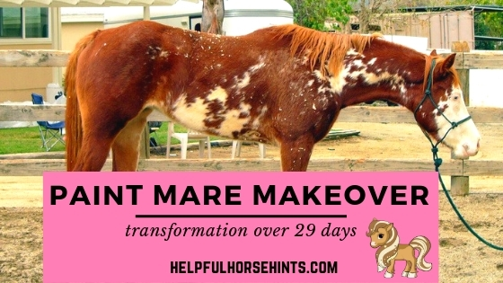 29 day paint mare makeover