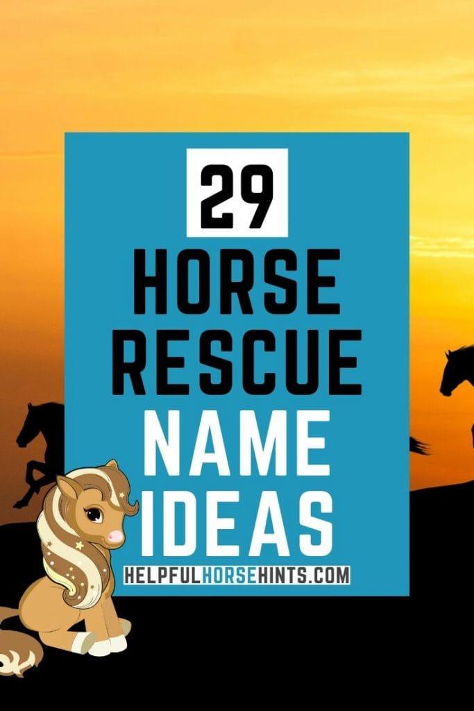 29 horse rescue name ideas