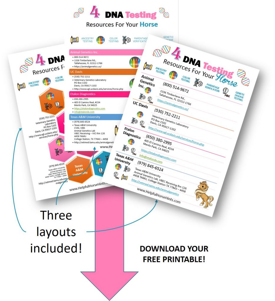 4 DNA Testing Resources for Your Horse