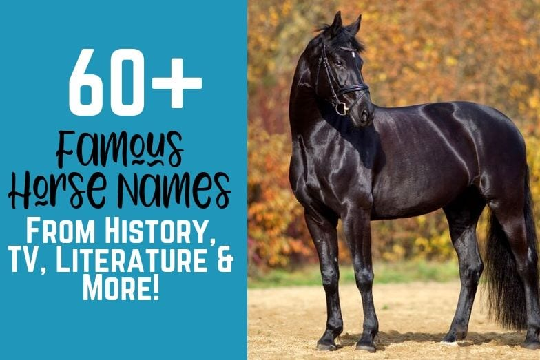 60+ Famous Horse Names from History, TV, Literature & More!