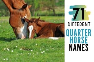 Guide to Choosing a Name for Your Quarter Horse With 71 Ideas