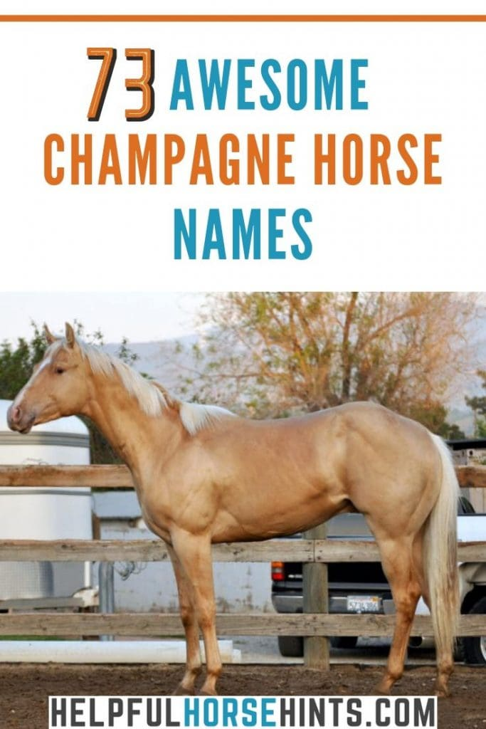 champagne horse with name text