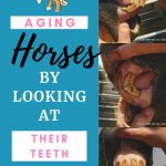 pictures of a 20 year old horses mouth and teeth