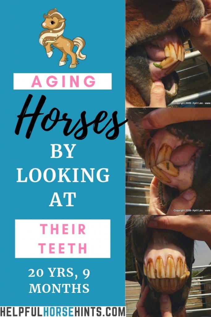 aging horses by their teeth