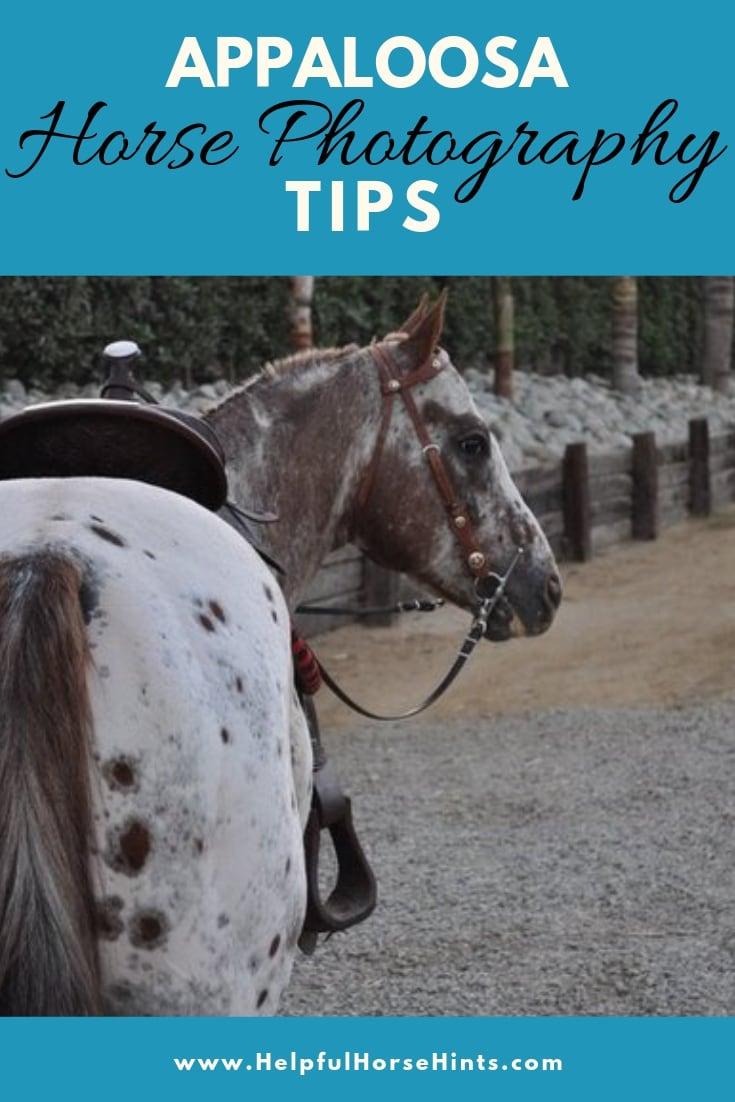 Appaloosa Horse Photography Tips