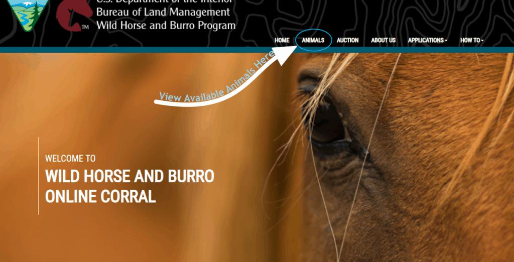 BLM Online Corral