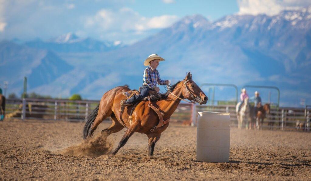 Barrel Racing Horse Breeds