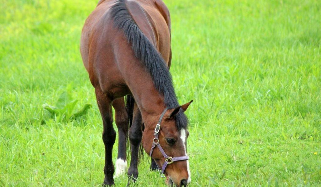 Bay horse in grass field
