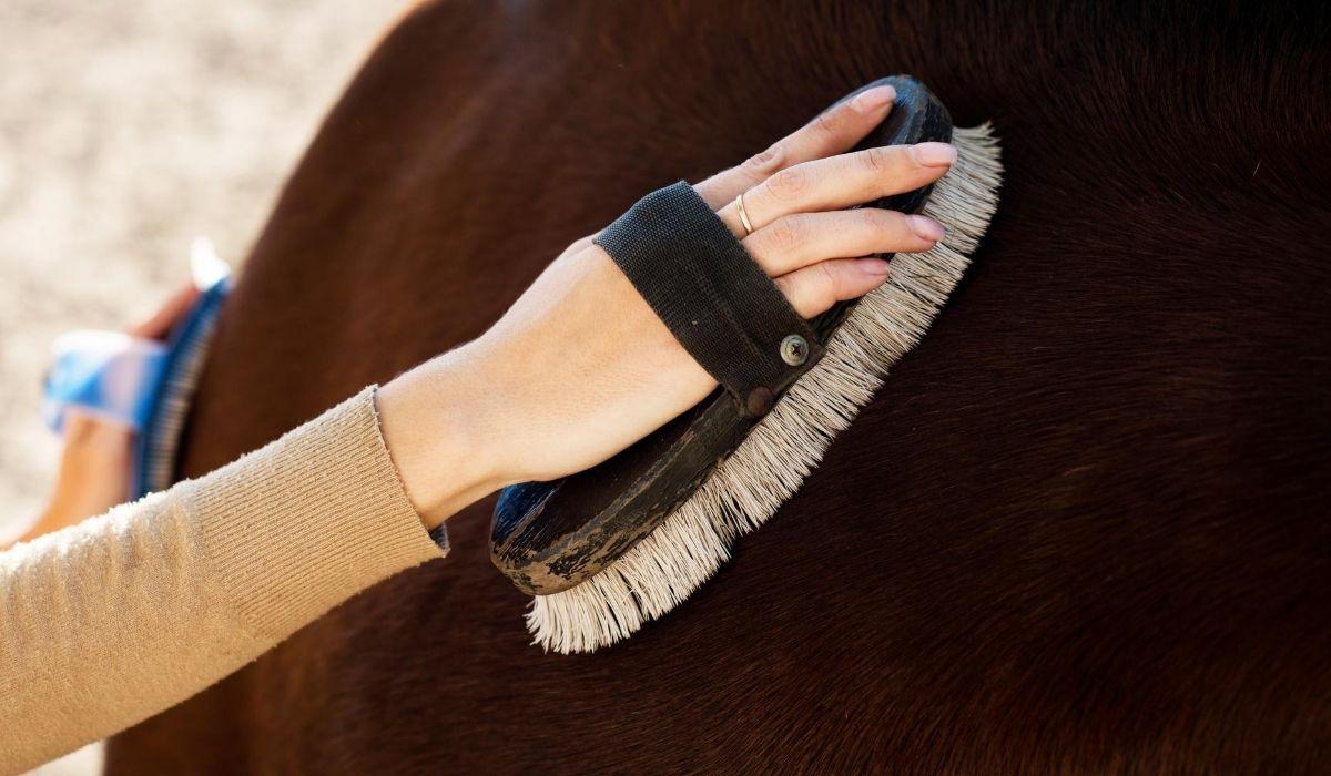 Brushing horse hair