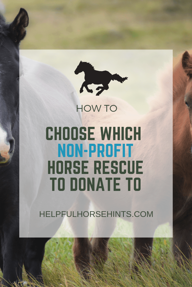 CHOOSE A HORSE RESCUE TO RECEIVE YOUR DONATIONS