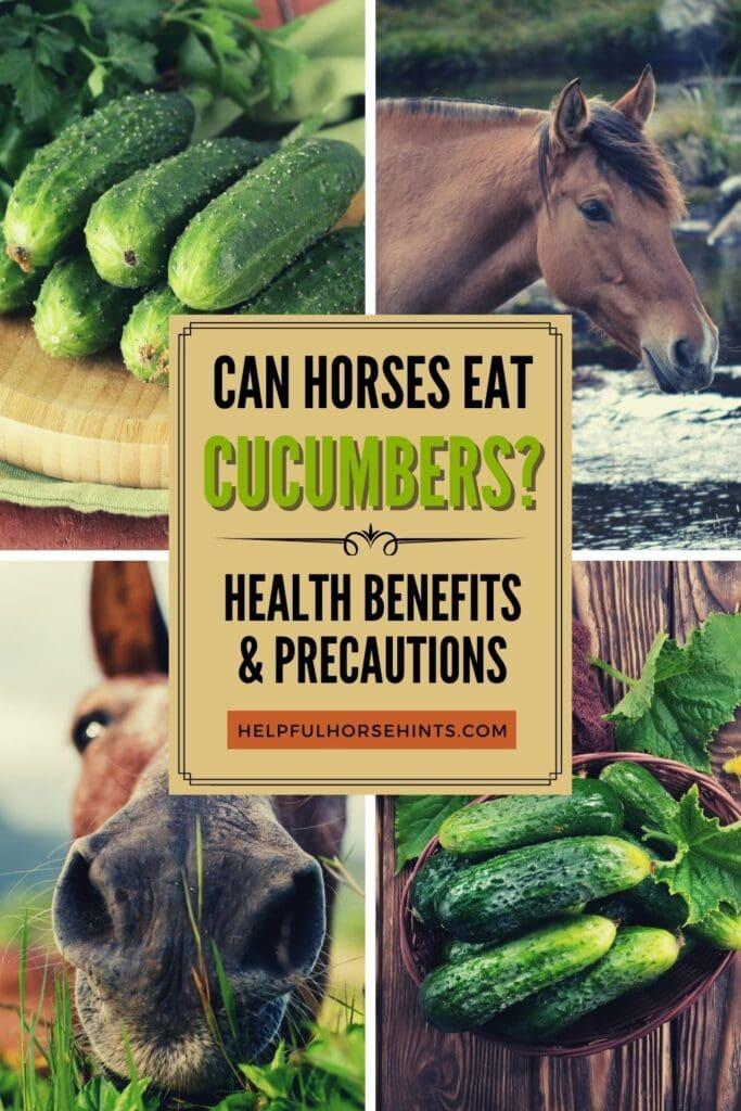 Pinterest pin - Can Horses Eat Cucumbers Health Benefits & Precautions