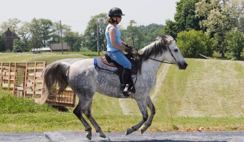 Cantering The Horse