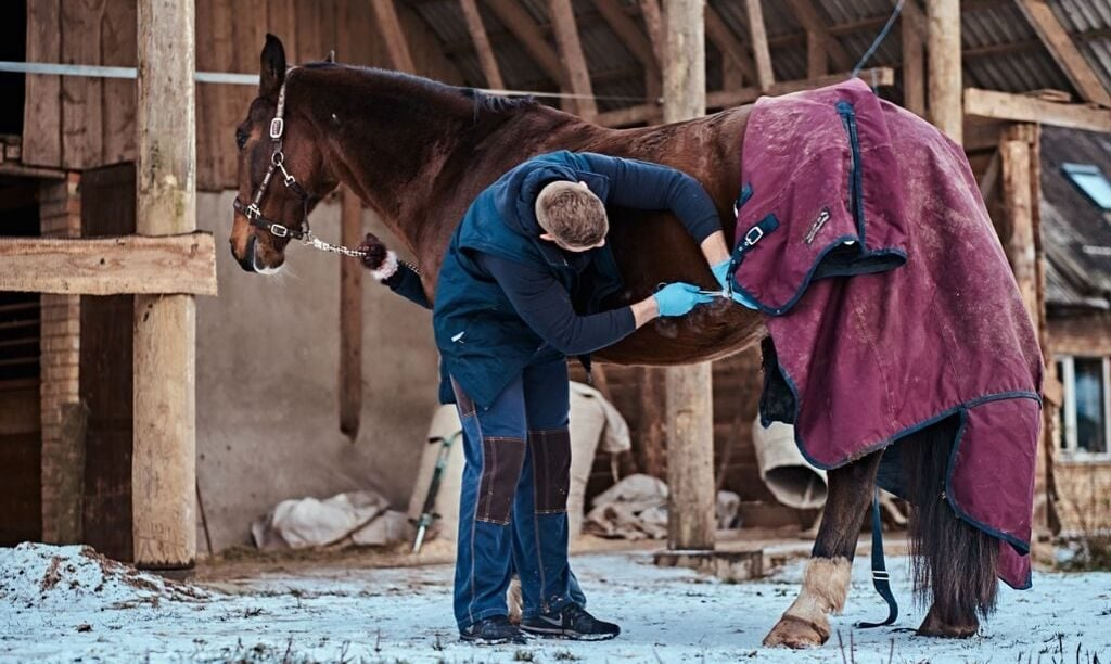 Veterinarian Checking Incision Site