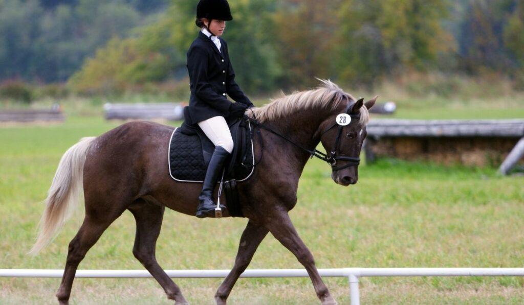 Chocolate Palomino Horse