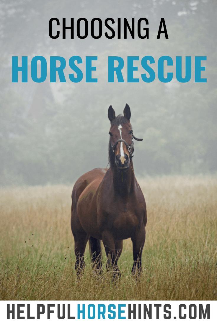 Choosing a Horse Rescue