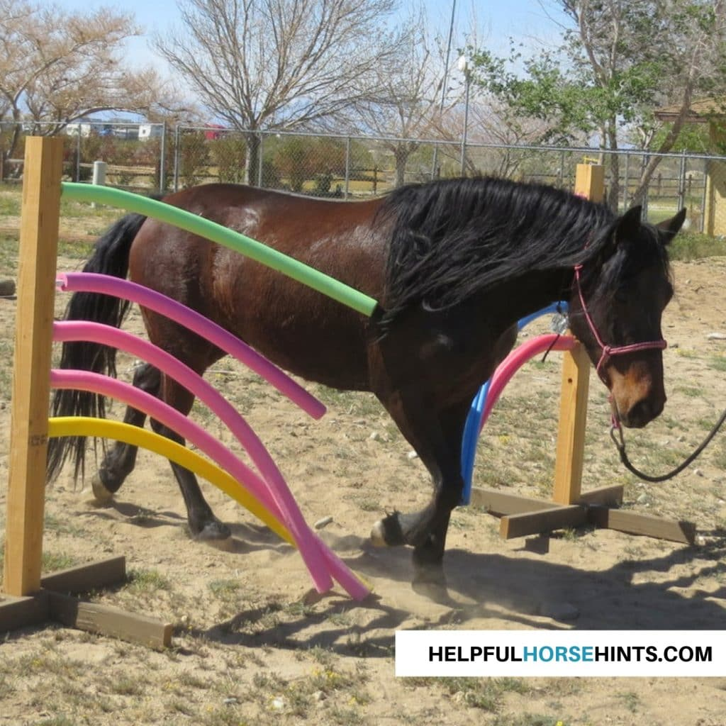 Completed Pool Noodle Obstacle with horse going through it